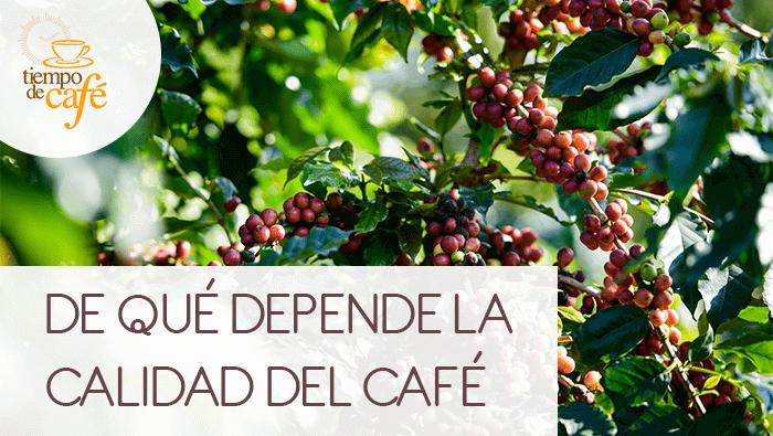 De qué depende la calidad del café